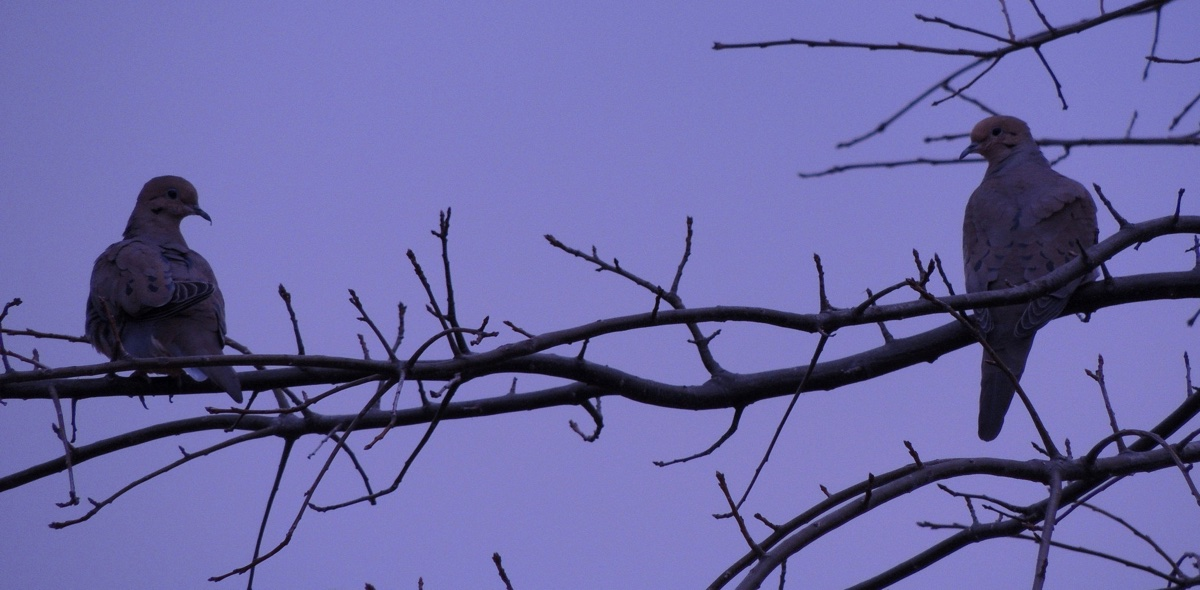 Evening mourning doves Book 3 Chapter 2: Reverse Transportation